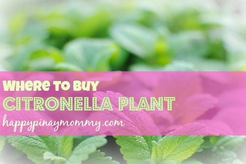Where to buy Citronella Plant in the Philippines - Happy Pinay Mommy